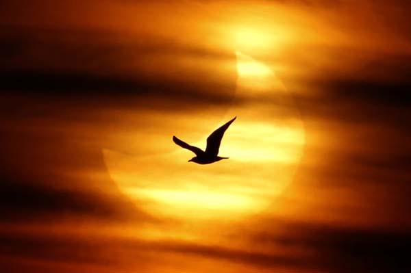 Gerhana Matahari' disebut 'Kusuf' (الكُسُوفِ) di dalam