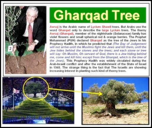 pokok g