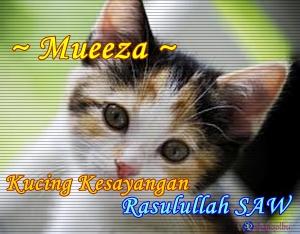 Mueeza ~ Kucing Kesayangan Rasulullah SAW