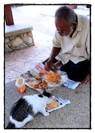 berkongsi rezeki dengan kucing makhluk Allah